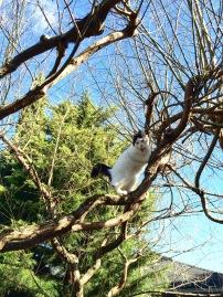 LuLu climbing the arbor